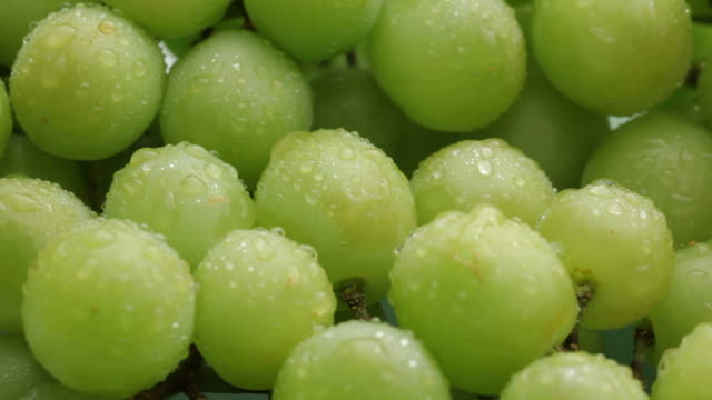 fresh green grapes, fruit background - vindruva bildbanksvideor och videomaterial från bakom kulisserna