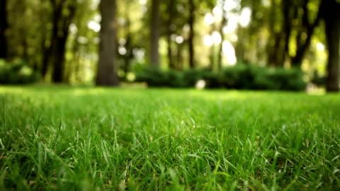frischer grüner rasen im freien, gras auf hinterhof (garten). - gras stock-videos und b-roll-filmmaterial