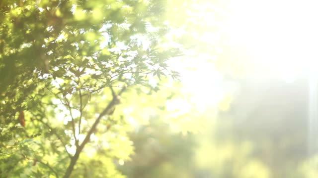 新鮮な緑の葉の晴れた日 - 木漏れ日点の映像素材/bロール