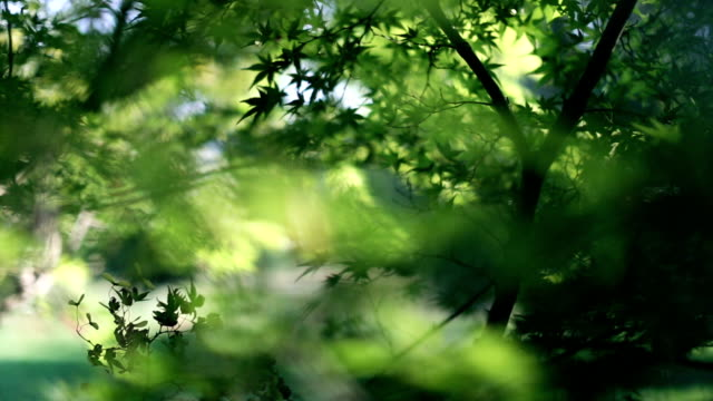 Fresh green leaves in a sunny day video