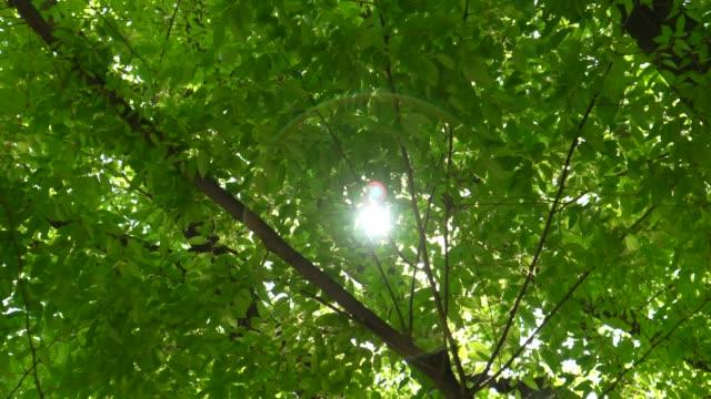 新鮮な緑の葉春に - 木漏れ日点の映像素材/bロール