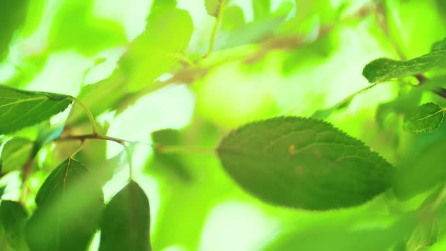 свежие зеленые листья - сочный стоковые видео и кадры b-roll
