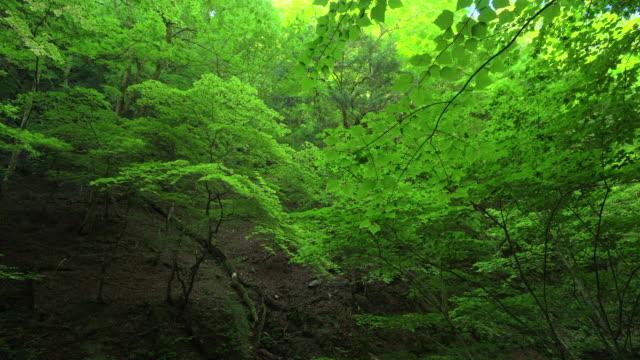 fresh green leaves - drewno tworzywo filmów i materiałów b-roll