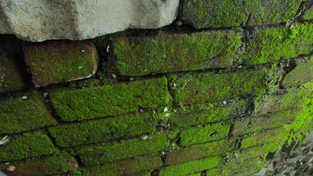 Fresh green moss on the brick wall