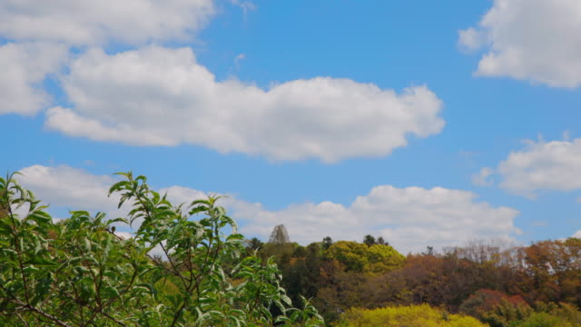 風に揺れる緑の木と青空 - environmentalism点の映像素材/bロール