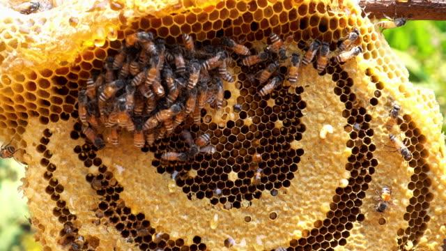 Fresh Honey video