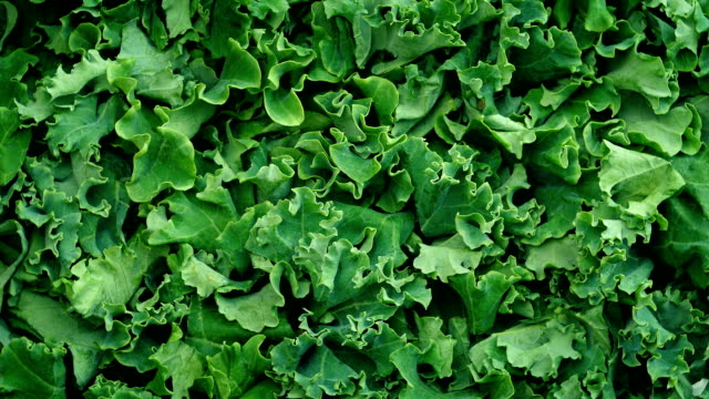 Fresh Kale Vegetable Rotating Overhead shot of fresh kale vegetable turning slowly detail cabbage stock videos & royalty-free footage