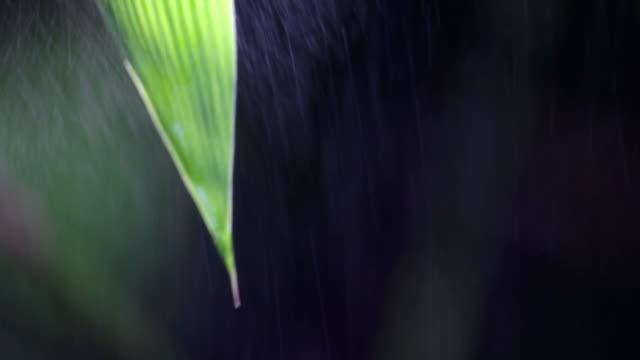 新鮮な葉竹 - 笹点の映像素材/bロール