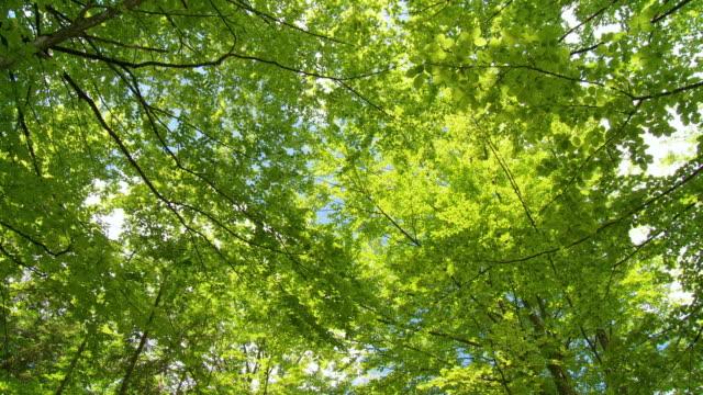 vídeos de stock e filmes b-roll de hd: folhas frescas - oscilar