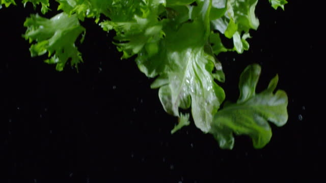 Fresh Lettuce Leaves Falling in Slowmo