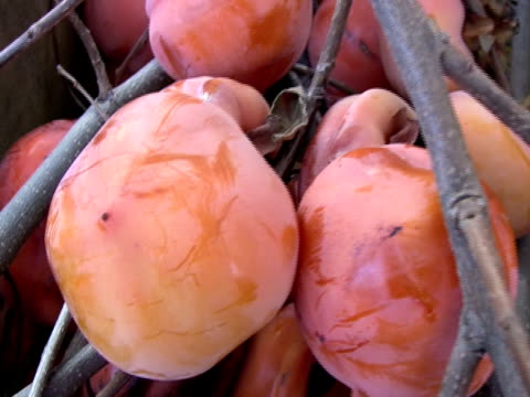 frischmarkt persimmons - kürzer als 10 sekunden stock-videos und b-roll-filmmaterial
