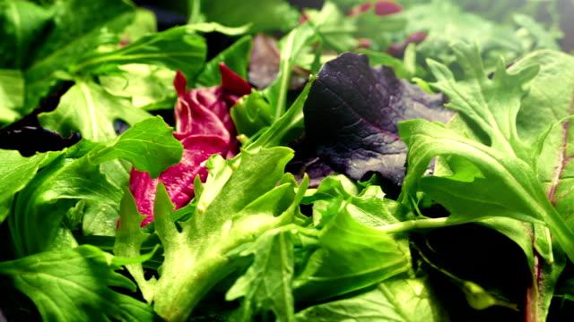 Fresh Mixed Leaf Salad Rotating video