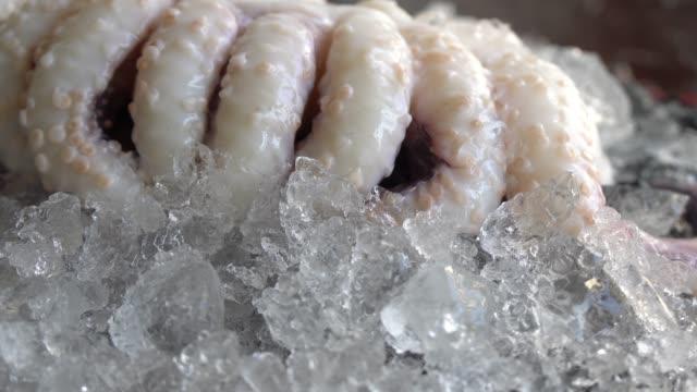 vidéos et rushes de poulpe frais et fruits de mer frais - coquillage
