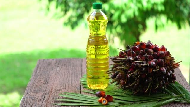 färsk olja palmfrukter och matlagning i glasflaskor palmolja på en palmblad isolerade på oskärpa bakgrunden. - plantage bildbanksvideor och videomaterial från bakom kulisserna