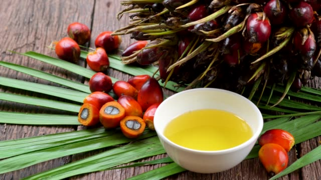 vídeos de stock e filmes b-roll de fresh oil palm fruits and cooking palm oil on a palm leaves in wooden background - palm oil bottles