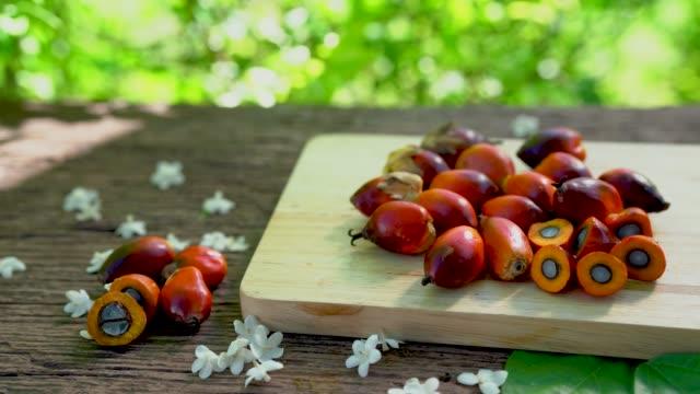 vídeos de stock e filmes b-roll de fresh oil palm fruits  on a palm leaves in wooden background - palm oil bottles