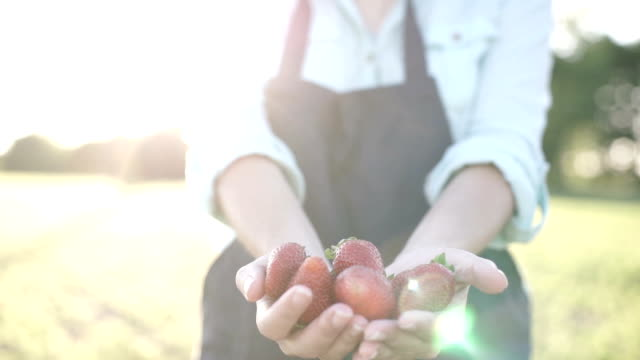vídeos de stock e filmes b-roll de fresh organic strawberries in farmer hands - strawberry