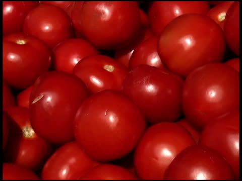 Fresh Organic Tomatoes video