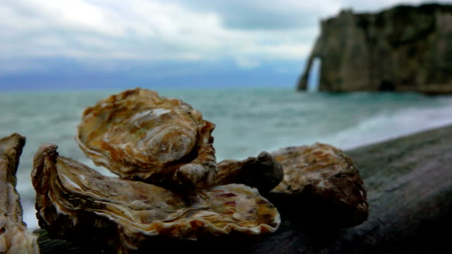 Fresh oysters on the Atlantic coast Fresh oysters on the Atlantic coast on a wooden surface against the background of ocean waves on the quay Etretat, Normandy normandy stock videos & royalty-free footage