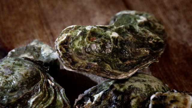 Fresh Oysters video