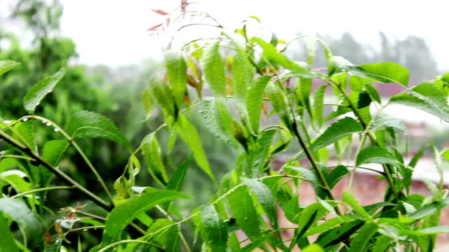 Fresh plant swaying through wing outdoor in nature during springtime video