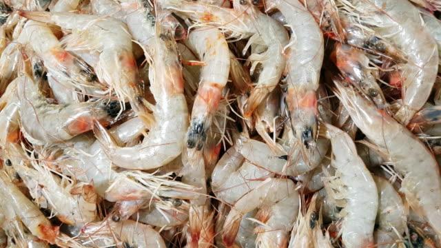 fresh prawns on fish market display - crostaceo video stock e b–roll
