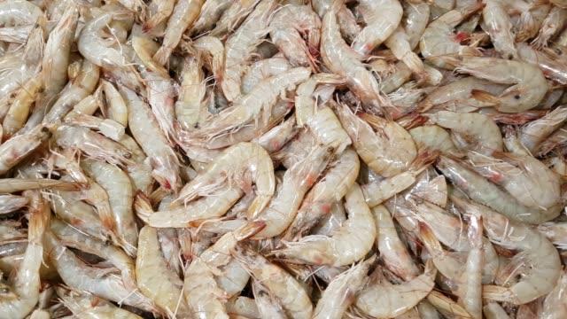 Fresh Prawns on Fish Market Display