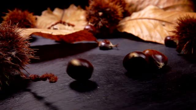 castagne fresche mature che cadono su una superficie nera - marrone video stock e b–roll