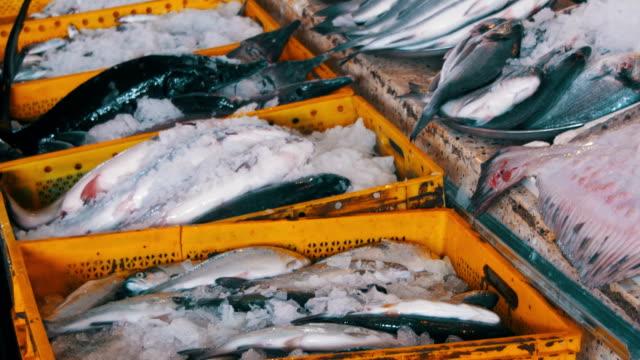 fresh sea fish in ice on the counter market - молодой картофель стоковые видео и кадры b-roll