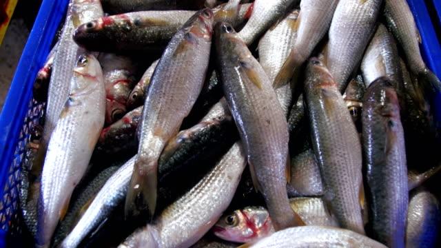 Fresh Sea Fish On The Counter Market video