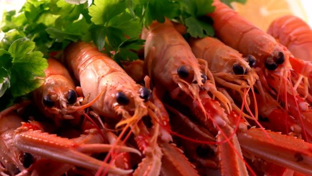 vidéos et rushes de poissons énormes de crevettes de fruits de mer frais - coquillage