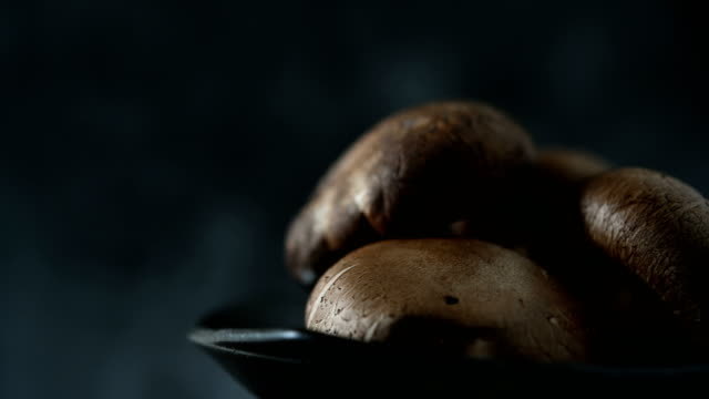 frische shiitake pilze sind gut für den körper. - speisepilz pilz stock-videos und b-roll-filmmaterial