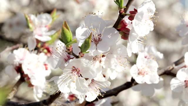 fresh spring background - albicocco video stock e b–roll