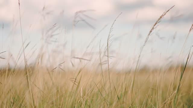 Fresh spring green grass on pretty meadow.
