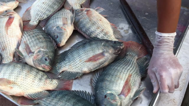 Fresh tilapia fish on sale in fish market