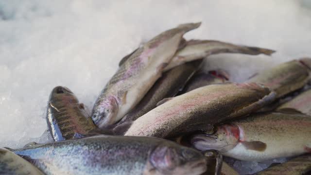 свежая форель со льдом на прилавке на рынке. замороженная рыба на прилавке в магазине. - морской окунь стоковые видео и кадры b-roll