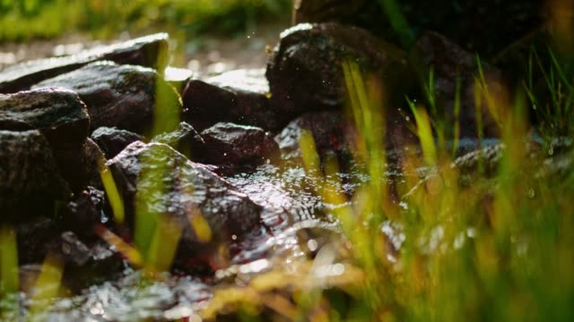ms fresh water flowing among rocks - muschio flora video stock e b–roll