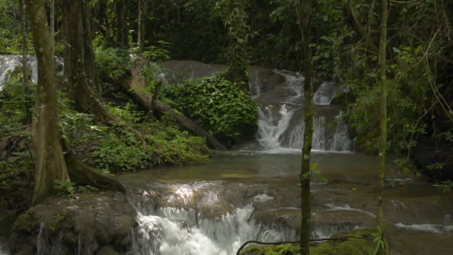 Fresh water flows from cascade over the rocks through green plant under sunlight in fertile forest. The abundance of tropical rain forest with small river and lush foliage vegetation.