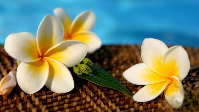 vídeos de stock e filmes b-roll de fresh white frangipani plumeria tropical exotic flowers over blue swimming pool water - flower white background
