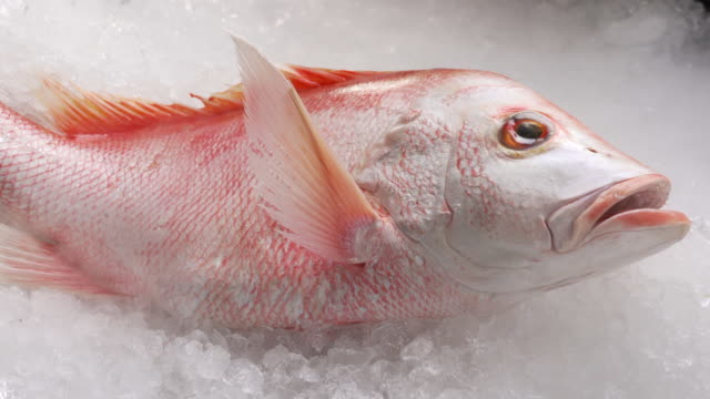 Fresh whole red snapper fish seafood uncooked on ice.
