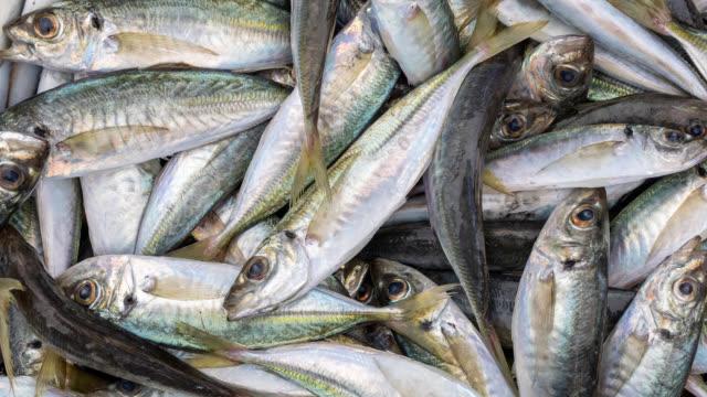 frisch gefangener australischer fisch - fang stock-videos und b-roll-filmmaterial