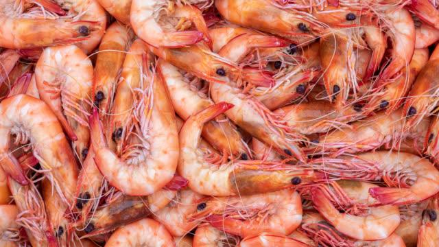 vidéos et rushes de crevettes australiennes fraîchement pêchées - coquillage
