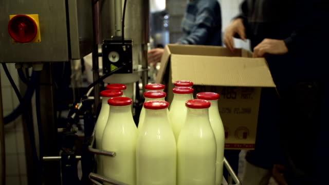 Freshly filled bottles with milk on the conveyor belt video