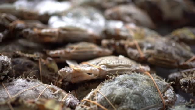 freshly grilled seafood - tajska kuchnia filmów i materiałów b-roll