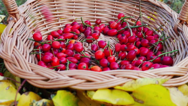vídeos de stock e filmes b-roll de freshly harvested rose hips in a wooden knit basket surrounded by yellow autumn leaves. - fruto da roseira