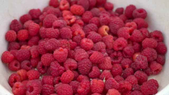 Freshly picked raspberry in a white container, organic product Freshly picked raspberry in a white container, close-up, ripe raspberries in a box, organic product, raspberries harvest handful stock videos & royalty-free footage
