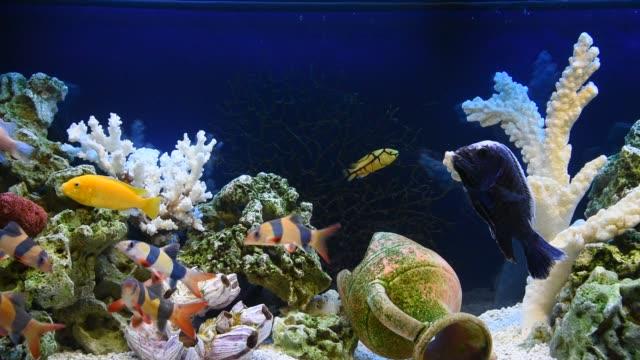 sötvattensakvarium i pseudo havet stil - akvarium byggnad för djur i fångenskap bildbanksvideor och videomaterial från bakom kulisserna
