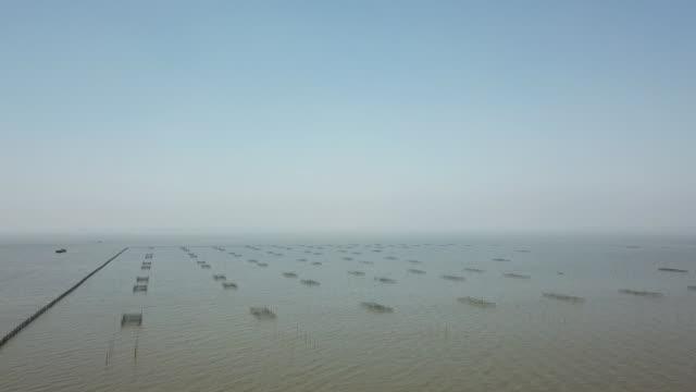 gabbie di cozze di perle d'acqua dolce nella cultura degli stagni per la produzione, concetto di acquacoltura - acqua dolce video stock e b–roll