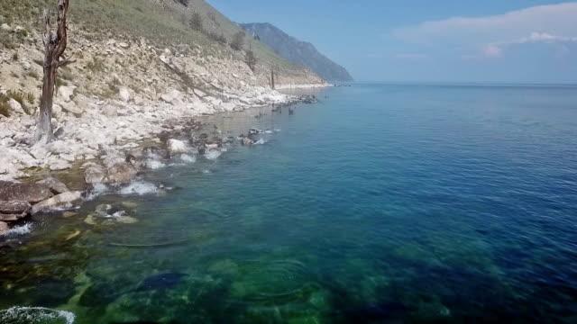 vídeos de stock e filmes b-roll de freshwater seals swim on the shores of lake baikal. aerial shooting from the drone. - lago baikal
