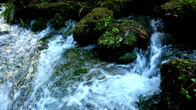 acqua corrente di sorgente d'acqua dolce - acqua dolce video stock e b–roll